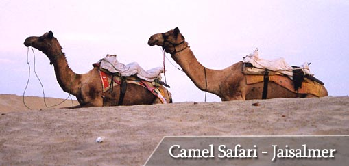 Camel Safari at Sam, Jaisalmer