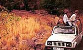 Jeep Safari at Hotel Ranthambore Regency, Ranthambore